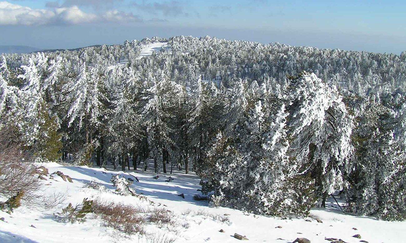 Катание на лыжах в Троодос (зимний сезон)